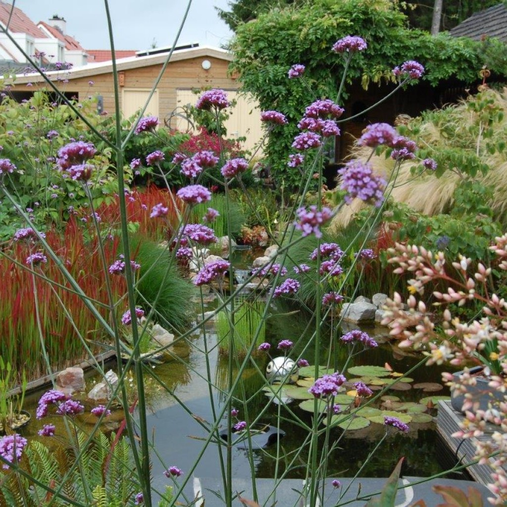 Oosterse tuin - Budel -3